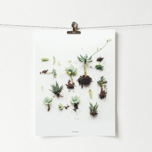 Plakat Succulent display